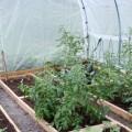 Chemická ochrana rostlin
