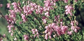Balkonové květiny v březnu