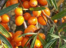 Barevné plody v zimní zahradě