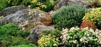 Barevné sladění květin ve skalce