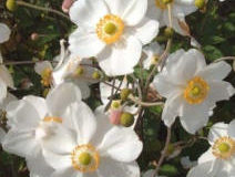 Jarní květiny do stínu