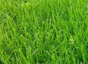 Údržba trávníku