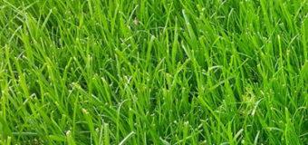 Okraje trávníku