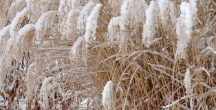 Okrasná zahrada v zimě