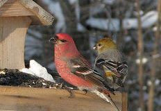 Co dát ptákům do krmítka
