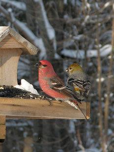 Ptáci v krmítku