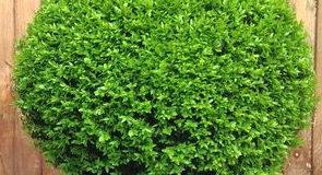 Ozdobné tvarování rostlin