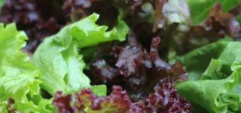 Barevné saláty