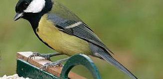 Co nabídnout ptákům v krmítku?