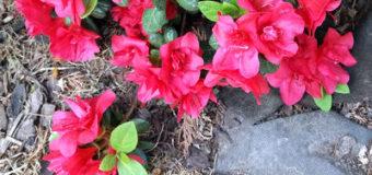Neobvyklé poškození rostlin