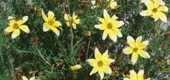 Nápady pro originální květináče a zahradní nádoby